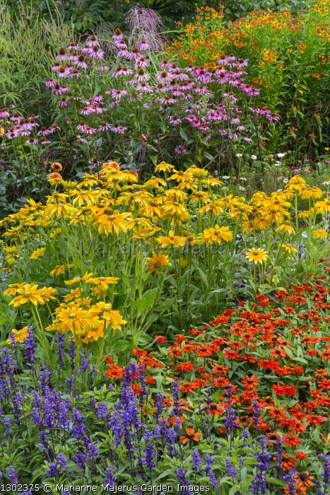 Rudbeckia 'Prairie Sun', Echinacea purpurea, zinnia, helenium
