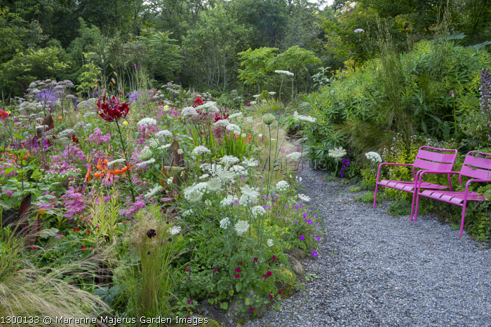 Pink metal chairs on gravel path, Ammi majus, Lilium 'Red Velvet', Filipendula rubra, Canna 'Phasion', Stipa tenuissima