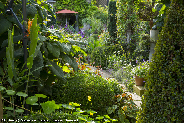 Path through shady urban garden leading to parasol by house, Myrsine africana, Cape myrtle, hydrangea, Hedychium coccineum 'Tara'