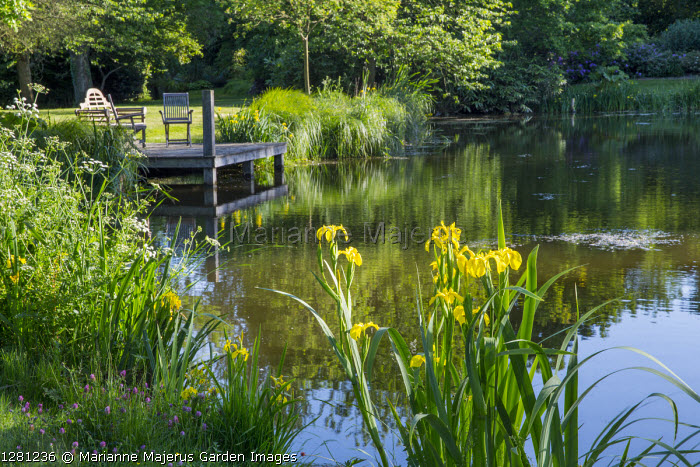 Chairs on wooden jetty by natural pond, Iris pseudacorus