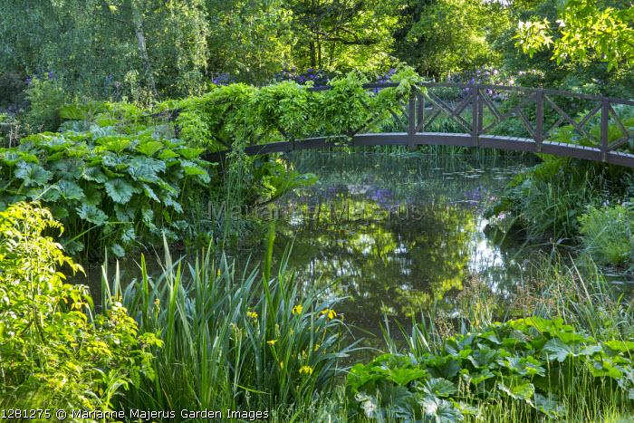 Wooden bridge over pond, Darmera peltata syn. Peltiphyllum peltatum, Iris pseudacorus