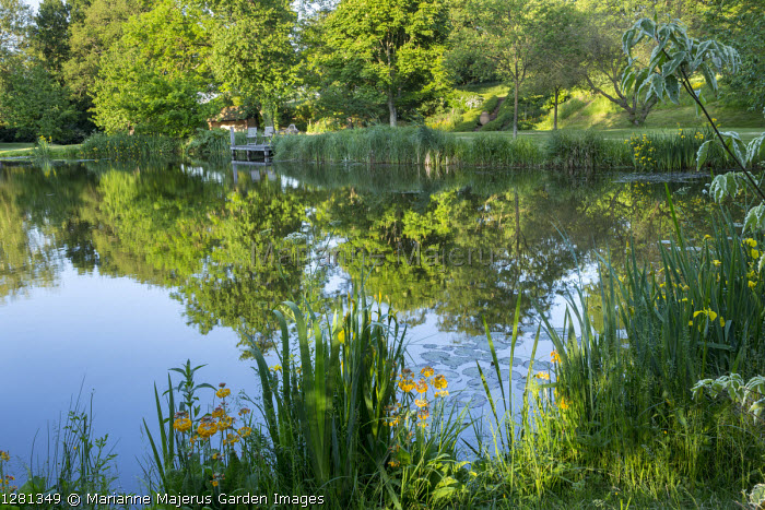 Iris pseudacorus and primula at pond edge, reflection of trees, wooden chairs on jetty