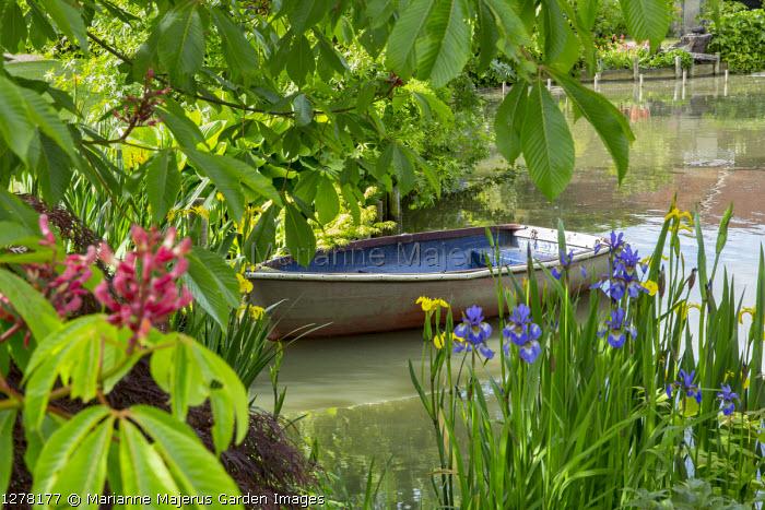 Boat on pond under Horse chestnut tree, Iris pseudacorus