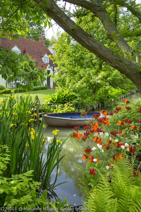 Boat on pond, acer, Rhododendron 'Glowing Embers', Iris pseudacorus