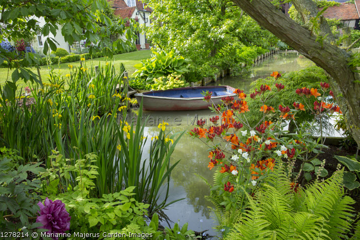 Boat on pond, Rhododendron 'Glowing Embers', Iris pseudacorus