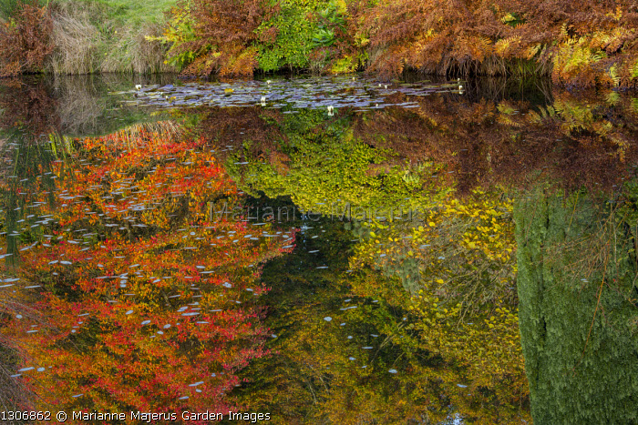 Reflections of autumnal colours in pond, Nyssa sylvatica