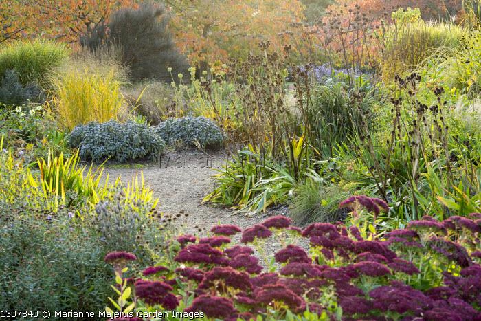 Hylotelephium (Herbstfreude Group) 'Herbstfreude' syn. sedum, molinia, Salvia officinalis, Eryngium agavifolium seedheads