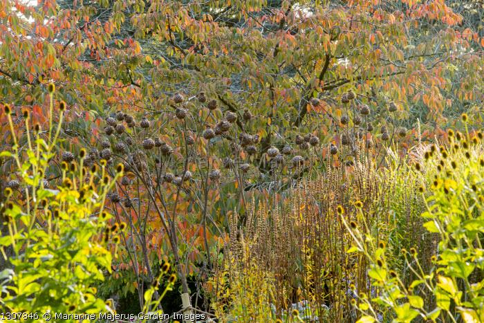 Artichoke seedheads, prunus
