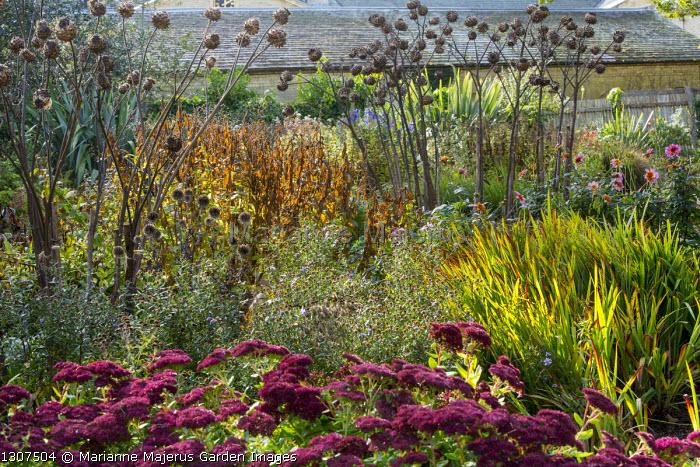 Artichoke seedheads, Hylotelephium (Herbstfreude Group) 'Herbstfreude' syn. sedum, aster, dahlia