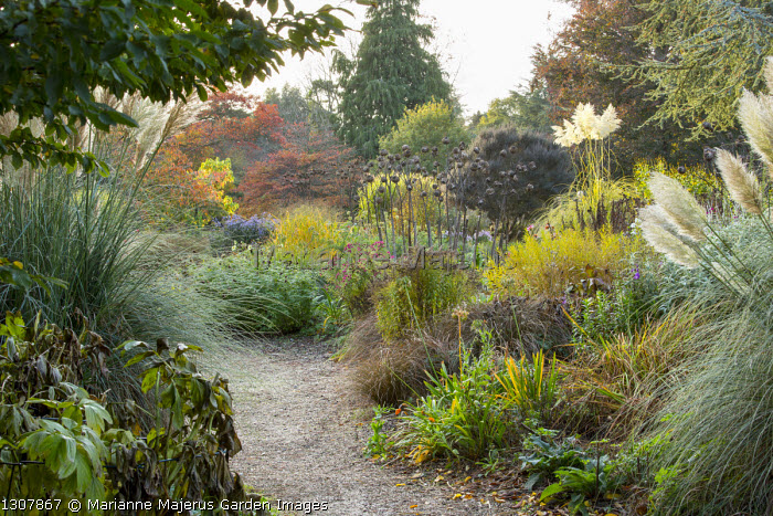 Gravel garden in autumn, artichoke seedheads, Cortaderia selloana
