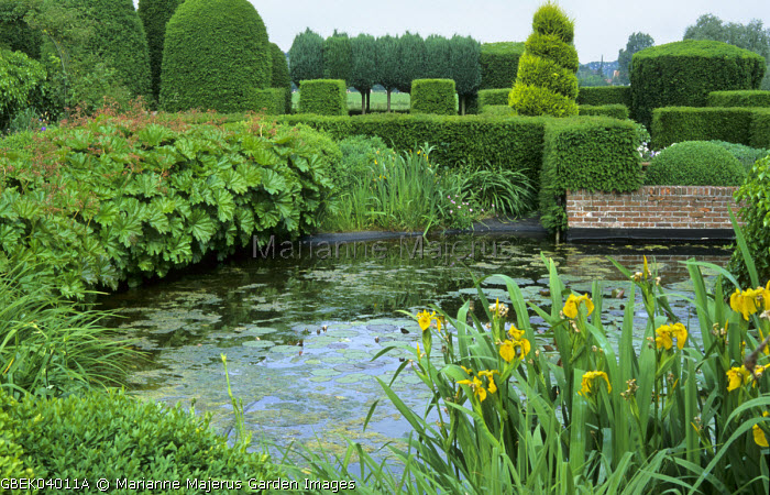 View across pond to clipped yew hedges and conifers, Iris pseudacorus, Darmera peltata syn. Peltiphyllum peltatum