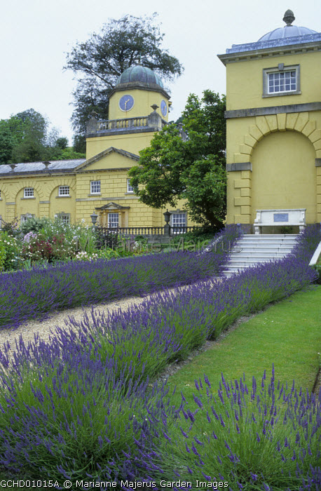 Gravel path edged with Lavandula x intermedia 'Grosso', stone bench by yellow painted house
