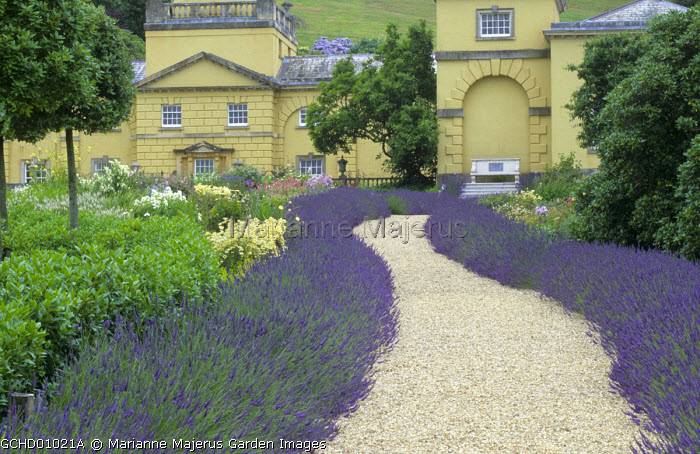 Gravel path edged with Lavandula x intermedia 'Grosso' leading to stone bench by yellow painted house