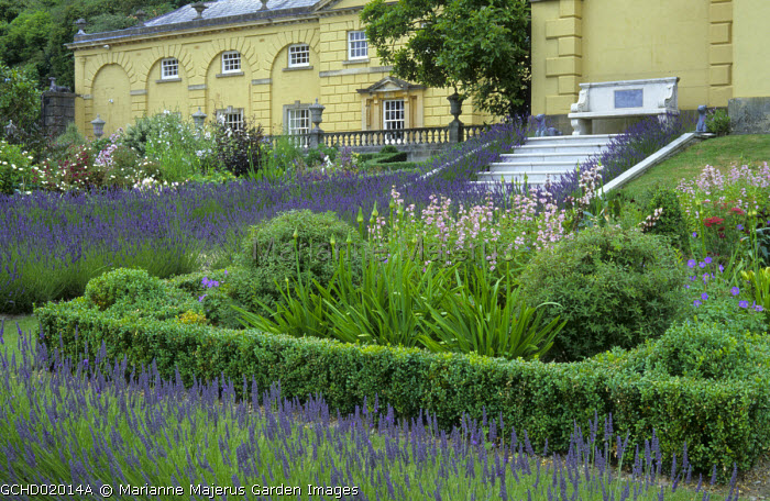 Perennial border with penstemoms and agapanthus edged with Lavandula x intermedia 'Grosso', stone bench by yellow painted house