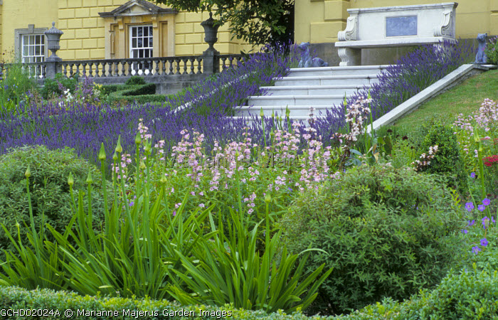 Penstemoms and agapanthus, Lavandula x intermedia 'Grosso', stone steps and bench