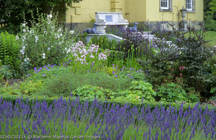 Perennial border with penstemoms and agapanthus edged with Lavandula x intermedia 'Grosso', stone bench