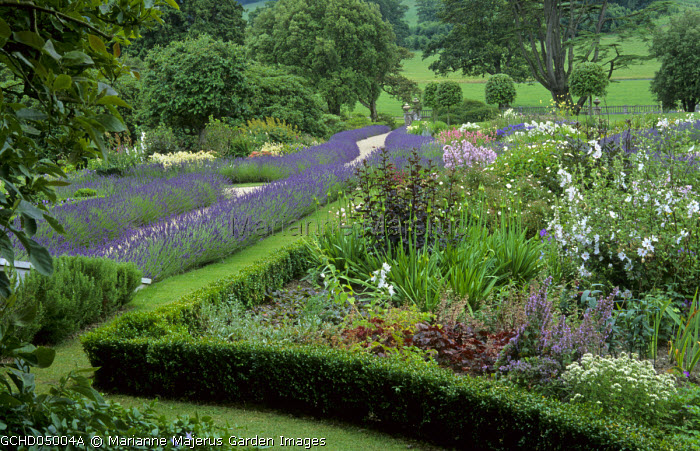 Buxus sempervirens and lavender edging borders