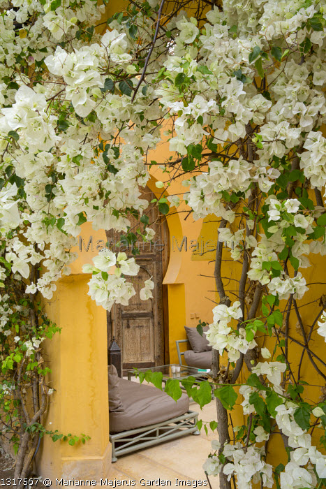 View through archway into exotic courtyard, bougainvillea, chairs with cushions