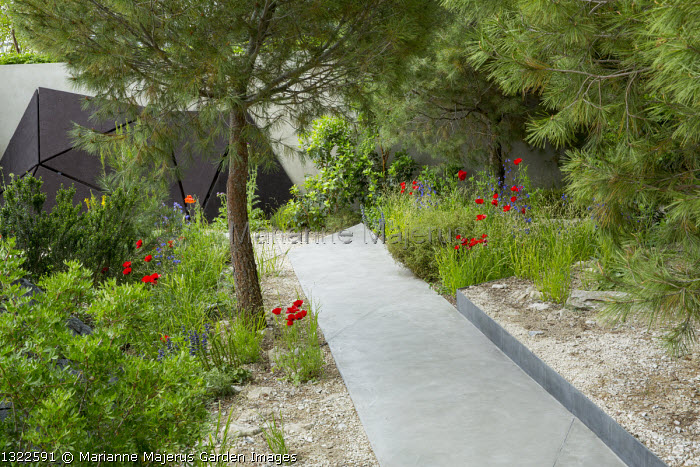 Pinus halepensis, Papaver rhoeas, stone path through mediterranean garden