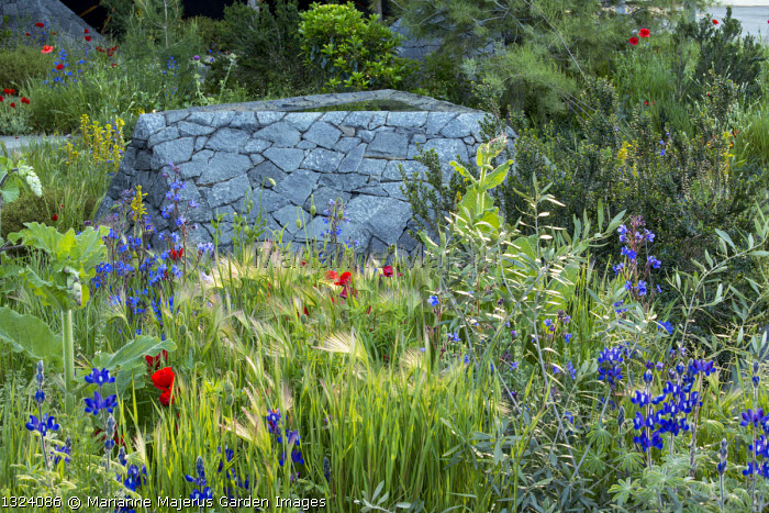 Black basalt stone raised pool, Lupinus pilosus, Papaver rhoeas, Anchusa azurea, Hordeum vulgare