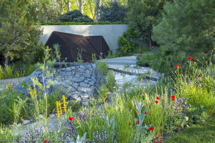 Pinus halepensis, black basalt stone raised pool, Papaver rhoeas