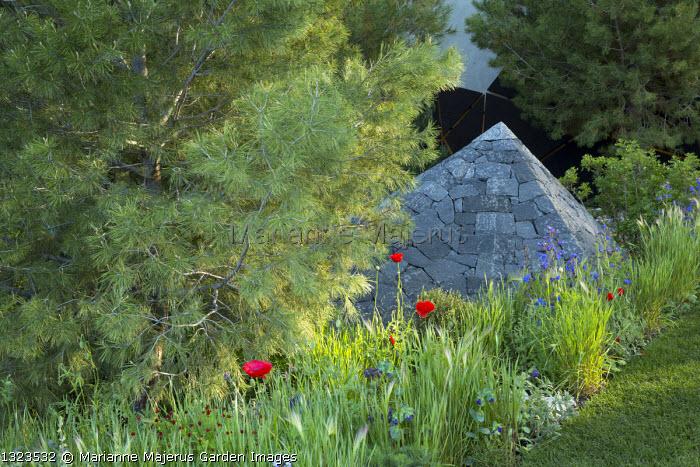 Pinus halepensis, black basalt stone pyramid, Papaver rhoeas