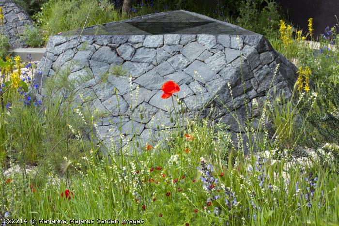 Black basalt stone raised pool, Crambe hispanica, Adonis annua, salvia
