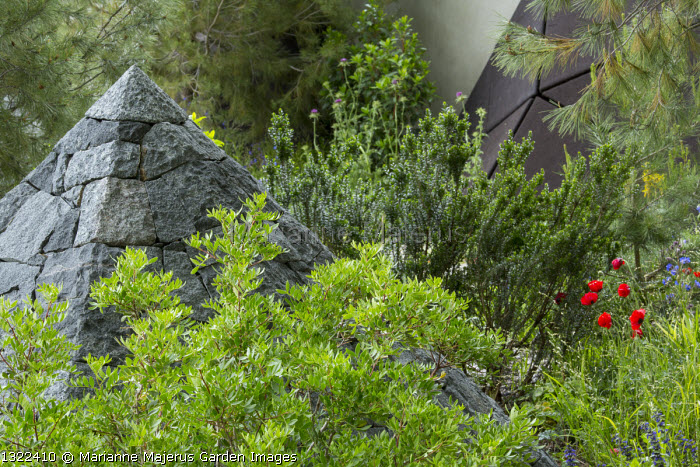 Black basalt stone pyramid, Pistacia lentiscus