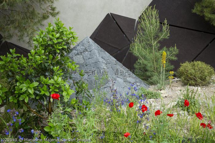 Black basalt stone pyramid, Papaver rhoeas, Arbutus x andrachnoides, Anchusa azurea