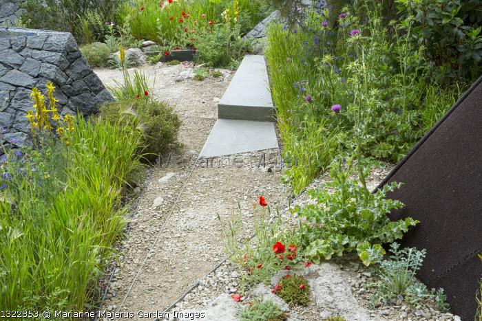 Path through mediterranean garden, Onopordum jordanicolum, Papaver rhoeas, Asphodeline lutea
