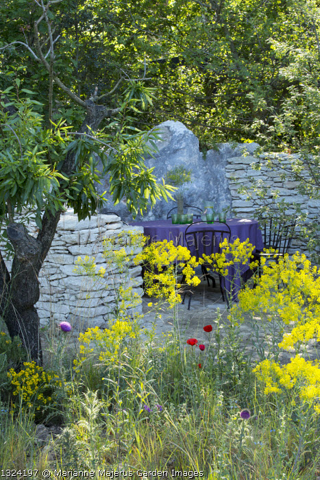 Table and chairs in dry-stone wall enclosure, Isatis tinctoria, almond tree