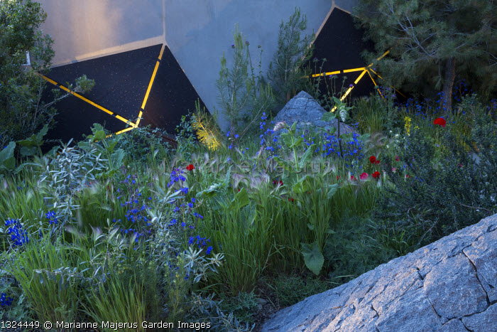 Mediterranean garden at night, lit sculptures, Papaver rhoeas, Anchusa azurea, Hordeum vulgare