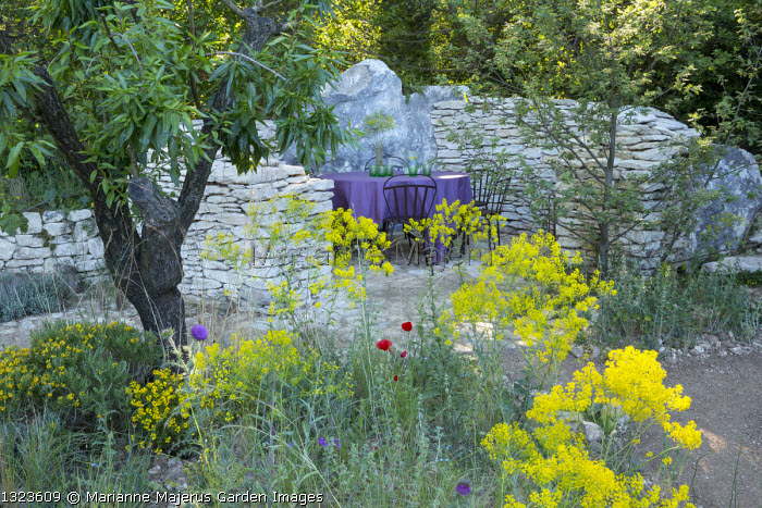 Table and chairs in dry-stone wall enclosure, Isatis tinctoria, almond tree, Quercus robur