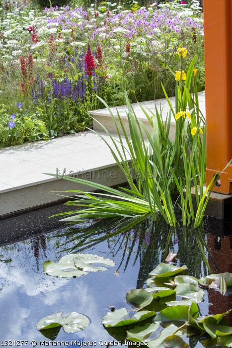 Iris pseudacorus and nymphaea in pond by stone path, Orlaya grandiflora, Lupinus 'Towering Inferno', Geranium palmatum and salvia in meadow