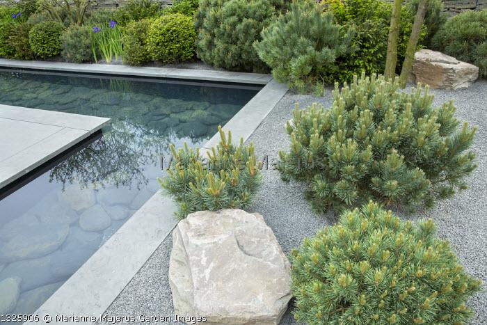 Formal pool with slate paddlestones and grey Yorkstone paved edging, basalt granite gravel chippings, Pinus sylvestris 'Watereri', rock