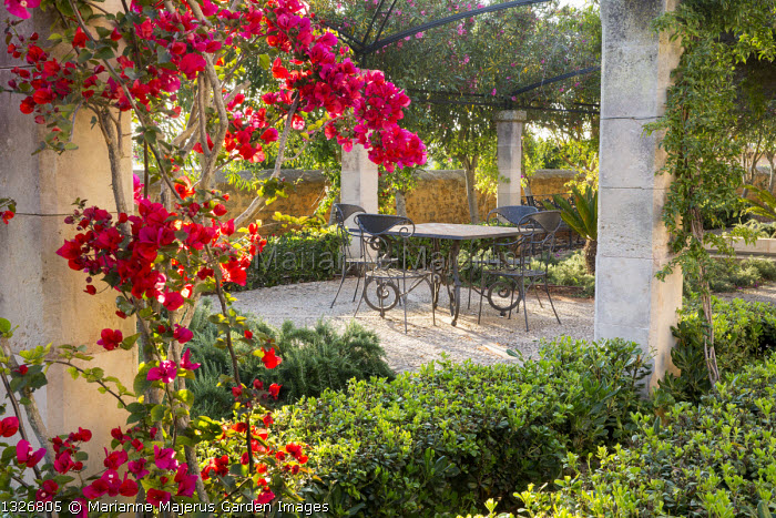 Bougainvillea climbing over pergola, Pittosporum tobira hedges, table and chairs on terrace