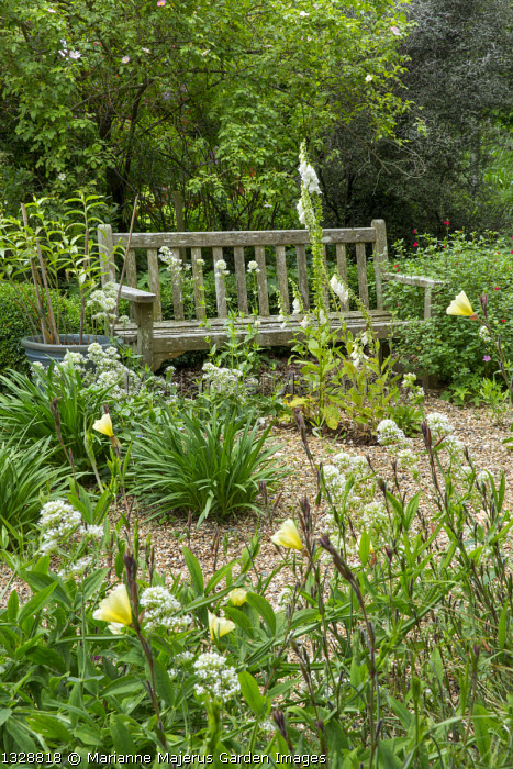 Wooden bench on gravel terrace, Centranthus ruber 'Albus', Oenothera biennis