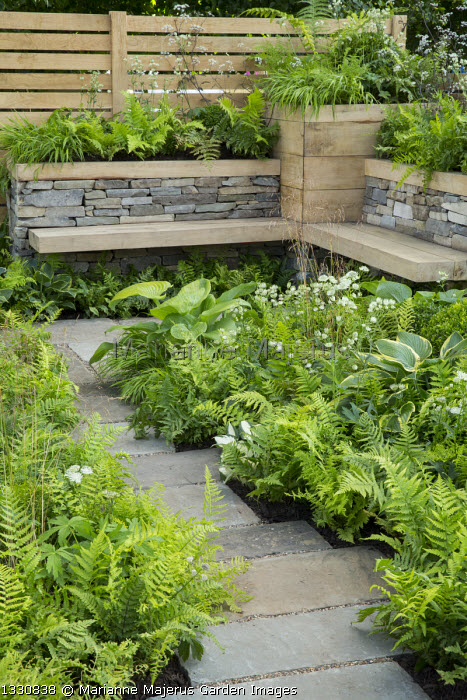 Stone path leading to built-in wooden benches by dry-stone wall, hostas, Dryopteris filix-mas, Astrantia major 'Alba'