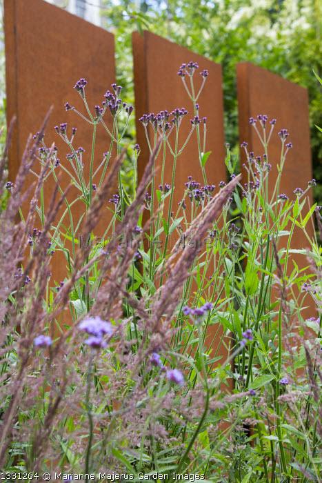 Cor-ten steel wall, Verbena macdougalii 'Lavender Spires', Verbena bonariensis, Calamagrostis x acutiflora 'Karl Foerster'