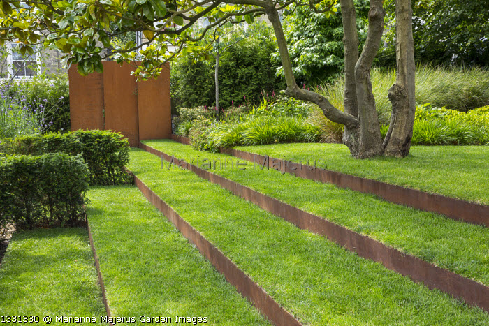 Grass steps with cor-ten steel risers under magnolia, cor-ten steel wall