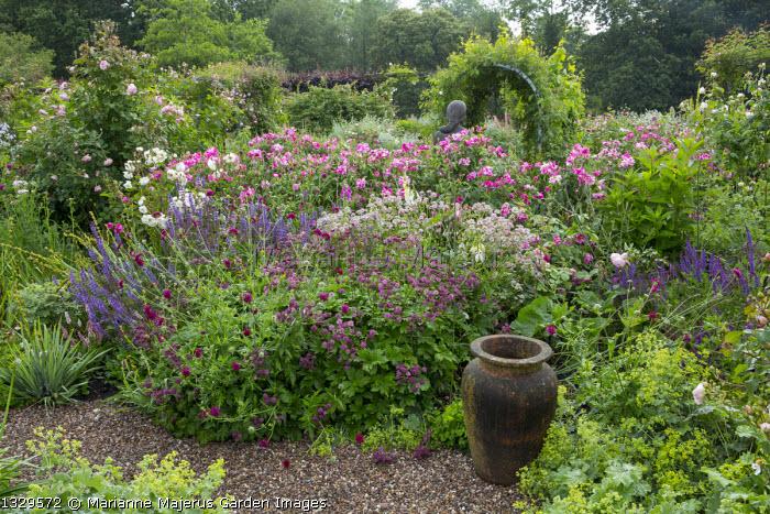 Rose garden, Rosa gallica 'Versicolor', Astrantia major 'Claret' and 'Roma', Knautia macedonica, Salvia × superba, foxgloves, urn
