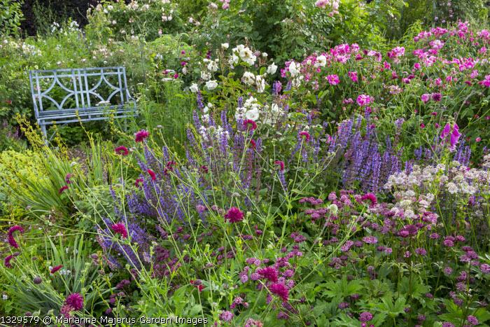 Metal bench in rose garden, Rosa gallica 'Versicolor', Astrantia major 'Claret' and 'Roma', Salvia × superba, Knautia macedonica