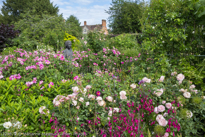 Rose garden, Rosa gallica 'Versicolor', penstemon, statue of Rosamund Clifford