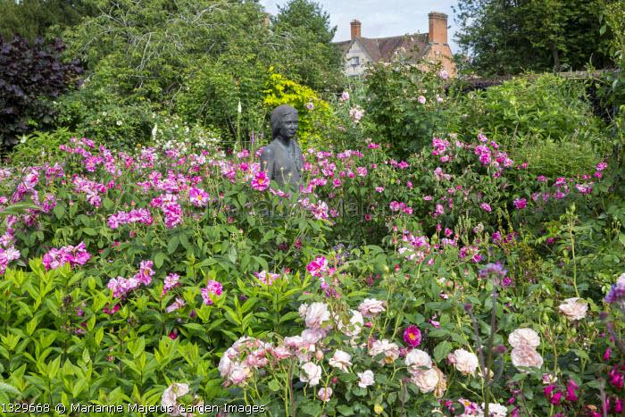 Statue in rose garden, Rosa gallica 'Versicolor', statue of Rosamund Clifford