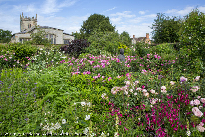 Rosa gallica 'Versicolor' in rose garden, penstemon