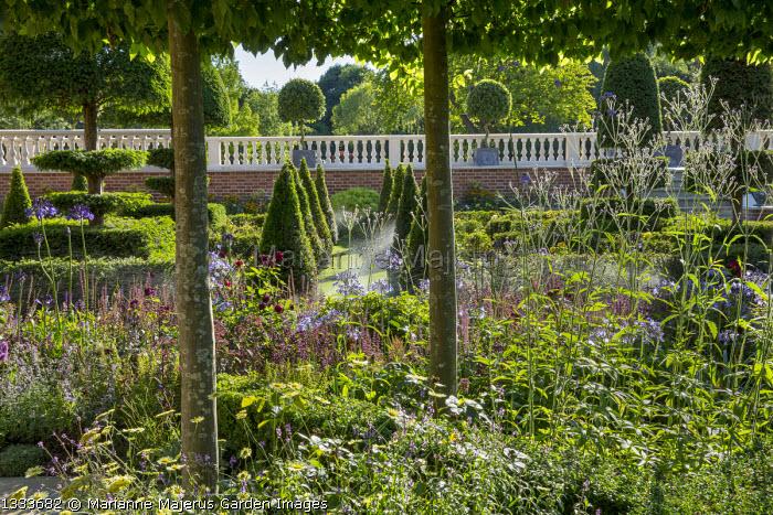 View across formal parterre, yew hedges, pyramids and topiary, Salvia nemorosa 'Caradonna'