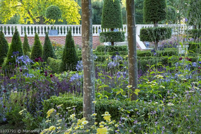 Formal box parterre Verbena macdougalii 'Lavender Spires', yew topiary, Verbena hastata f. rosea