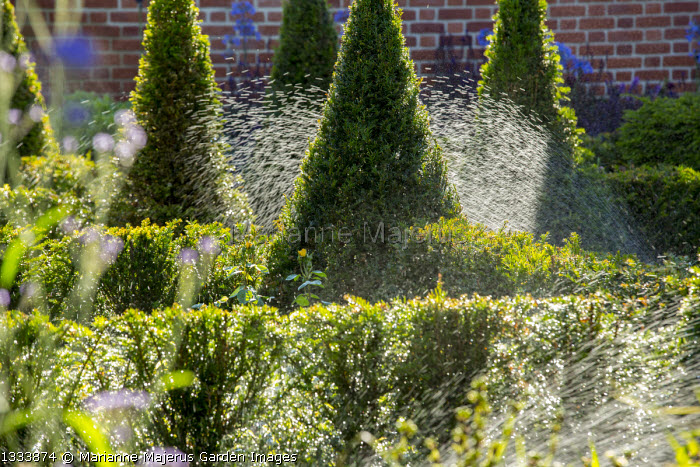 Irrigation system watering yew hedge parterre
