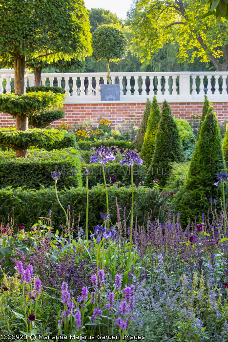 Yew topiary and hedges, stone balustrade on brick wall, Agapanthus 'Castle of Mey', Stachys officinalis 'Hummelo', Salvia nemorosa 'Caradonna', Nepeta racemosa 'Walker's Low'