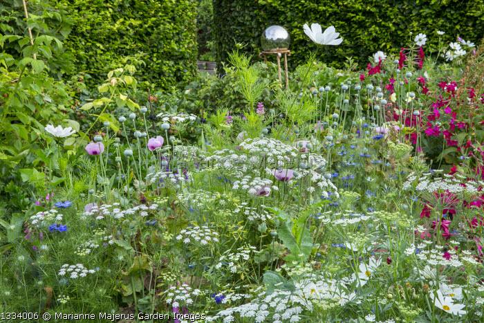 Ammi majus, poppy seedheads, Nicotiana sylvestris